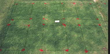 Basagran herbicide effect on Mini-Verde? bermudagrass