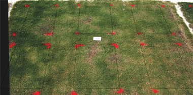 MSMA herbicide effect on Mini-Verde? bermudagrass